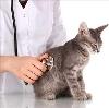 Ветеринарные клиники в Глазове